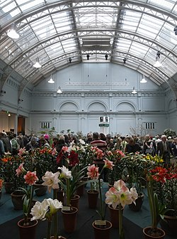 RHS Lindley Hall flower show 5072.JPG