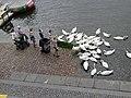 Rašínovo nábřeží, krmení labutí.jpg