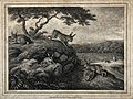 Rabbits playing and eating outside their burrow. Etching by Wellcome V0021563.jpg