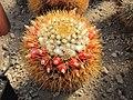 Raccolta succulenti Savona (3).jpg