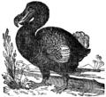 Raphus cucullatus-(Brockhaus-1837).png