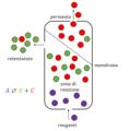 Reattore a membrana.png