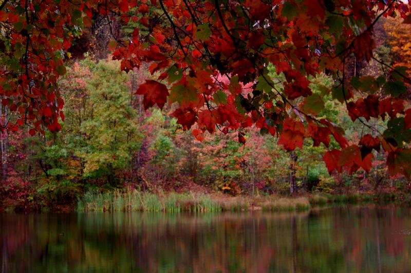 File:Red-fall-tree-lake - West Virginia - ForestWander.png
