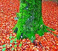 Red and green - Flickr - Stiller Beobachter.jpg