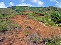 Red lateritic soil in the mountains of Guam (line378776781).jpg