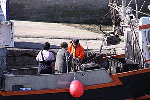 Retour de la pêche à la seiche du fileyeur Jason IV (31).JPG