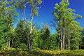 Reynolds Spring Natural Area (9) (29403683581).jpg