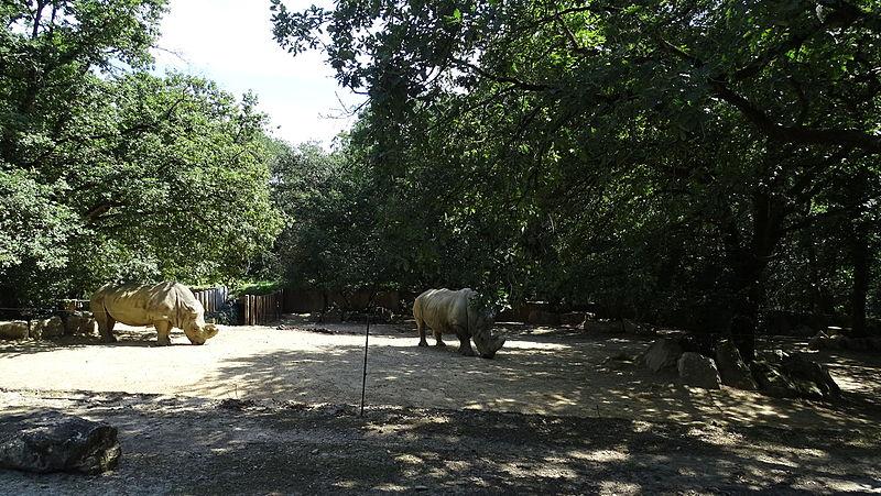 Fichier rhinoc ros au zoo de plaisance du touch jpg for Sevilla plaisance du touch