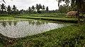 Rice paddies (15310330226).jpg