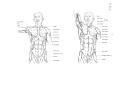 Richer - Anatomie artistique, 2 p. 113.png