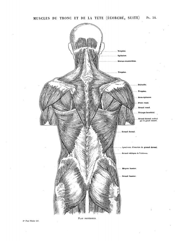 Filericher Anatomie Artistique 2 P 61g Wikimedia Commons