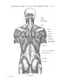 Richer - Anatomie artistique, 2 p. 61.png