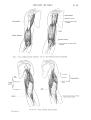 Richer - Anatomie artistique, 2 p. 63.png