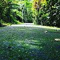 Road in jungle.jpg