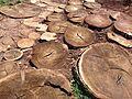 Road of trees.jpg