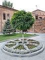 Robinia pseudoacacia Yerevan Ararat Brandy Factory.jpg