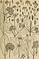 Rocky Mountain flowers - an illustrated guide for plant-lovers and plant-users (1920) (14804809003).jpg