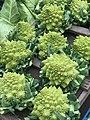 Romanesco broccoli MRD.jpg