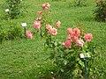 Roseto-di-roma-capitale---sito-di--il-cimitero-ebraico--dal-1645-fino-al-1934 9005796993 o 37.jpg