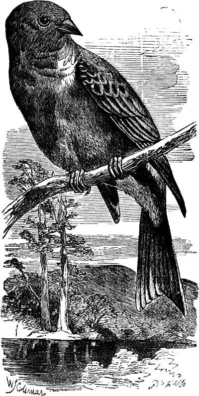 Bridge Of Birds Epub