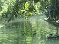 San Antonio River at Witte Museum IMG 3155.JPG