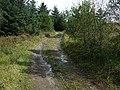 Sarn Helen Roman Road, Hirfynydd - geograph.org.uk - 963792.jpg