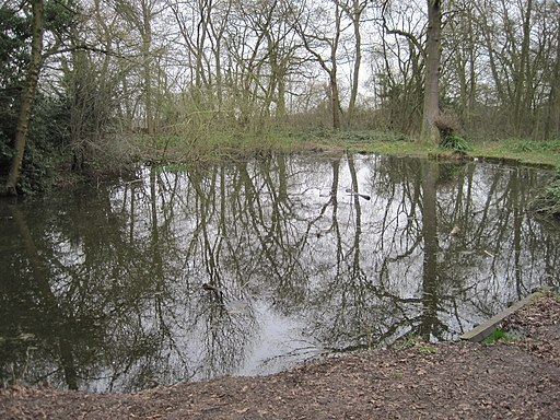 Scadbury Park pond