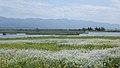 Sceanry of the lagoon Fukushimagata 20160504c.jpg