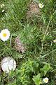 Schildkröte 31.jpg