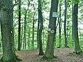 Schwäbischer Alb Nordrand Weg (HW1) Oberschwaben Schwäbischer Alb Weg (HW7) Albtraufgängerweg - panoramio.jpg