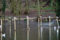 Seagulls (2335398302).jpg