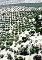 Segura-Cazorla 1976 25.jpg