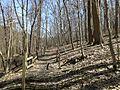 Self-guided nature trail at Latodami Nature Center - 7.jpeg