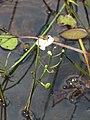 Seney National Wildlife Refuge (6033020894).jpg