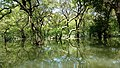 Serenity of Ratargul Swamp Forest 01.jpg