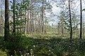 Sestroretsk swamp 2020-06-07-1.jpg