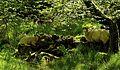 Sheep ^ Deer at Loweswater - panoramio.jpg
