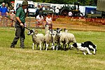 Sheep Dog Display (2620999679).jpg