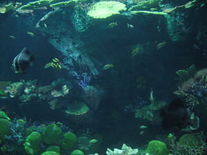 Siam Ocean World 12