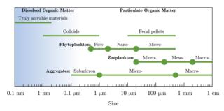 Particulate organic matter