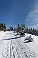 Skiing in Oberhof March 2013-11-Ski track.jpg
