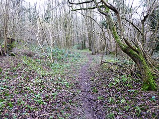 Sladden Wood