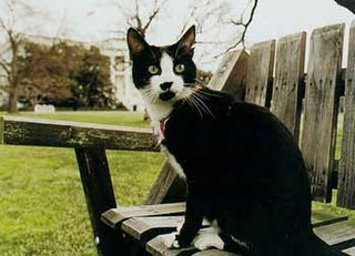 Socks (cat) Cat belonging to Bill Clinton and family