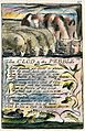 Songs of Innocence and of Experience copy L object 40 The CLOD & the PEBBLE.jpg