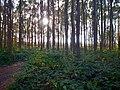 Sonnenuntergang - panoramio (35).jpg