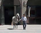 Spanish Riding School stable.jpg