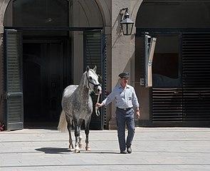 Spanish Riding School Tour