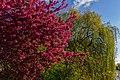 Spring (152799411).jpeg