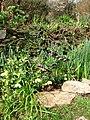Spring garden flowers, Percuil River - geograph.org.uk - 382131.jpg
