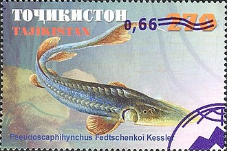 Syr Darya sturgeon - Syr Darya sturgeon depicted on a postage stamp from Tajikistan